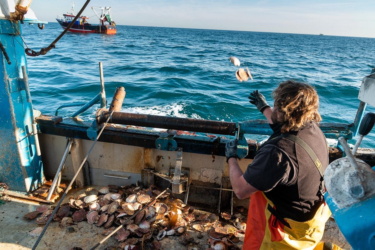 Pêcheur relançant des coquilles Saint-Jacques à la mer