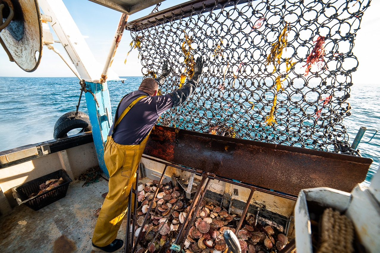 Pêcheur ramassant des coquilles Saint- Jacques