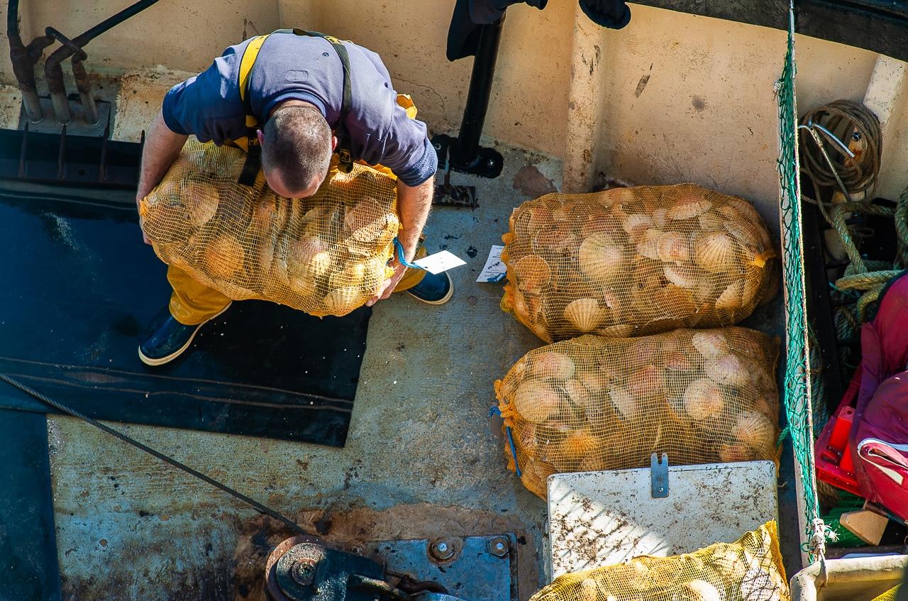 Pêcheur ramassant des sacs de coquilles Saint-Jacques au bout du chalutier