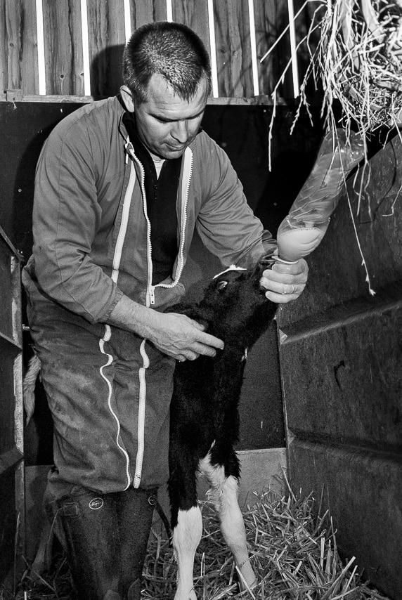 Portrait d'un agriculteur en noir et blanc donnant à boire à un veau