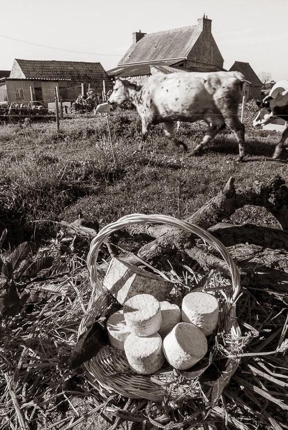 Panier avec fromages devant un champ de vaches